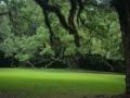 Jungle Gardens, Avery1