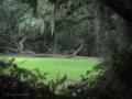 Jungle Gardens, Avery3