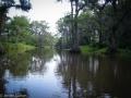 Caddo Lake 2013 CL1