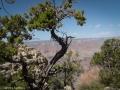 Grand Canyon GC6