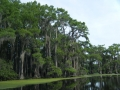 Caddo Lake 2013 CL3