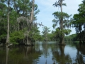 Caddo Lake 2013 CL2