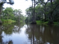 Caddo Lake 2013 CL1